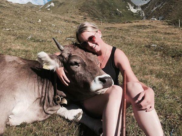 💕 #originalbraunvieh Alpe Verbella