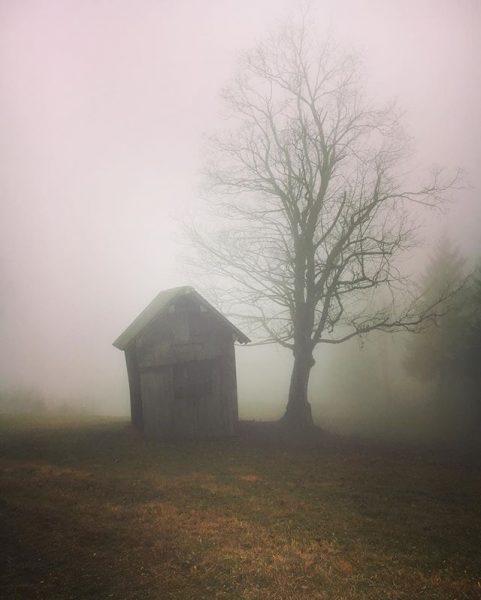 #schwende #dornbirn #vorarlberg #trailrun #trailrunning #seenonmyrun #fall #herbst #november #nebel #foggy #novemberday Schwende ...
