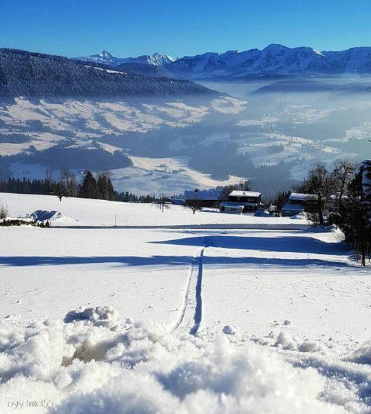 Lust auf eine Rodelpartie - who want's to sledge?!😄 #hellofromösterreich #winterwalk #snow #morningwalk ...