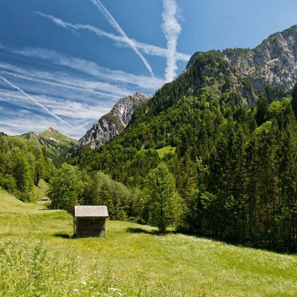 Über die Wiesen des Biosphärenparks #visitvorarlberg #visitaustria #hiking #alps #alpstraveller #sommer #visitaustria #austrianalps ...