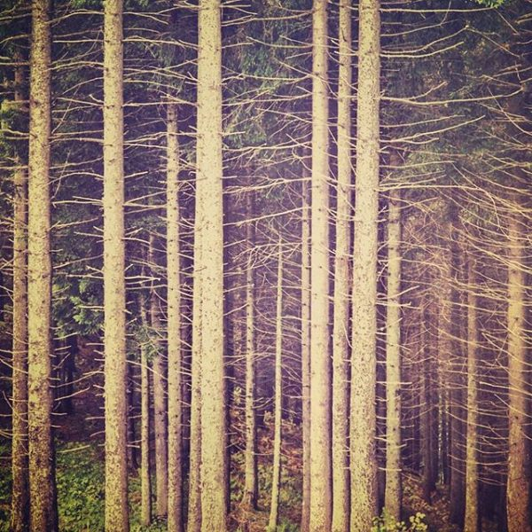 Patterns in nature. #naturelover #naturephotography #patterns #treelovers Landal Brandnertal