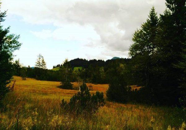 #hochhäderich #bregenzerwald #vorarlberg #österreich #austria #visitvorarlberg #wandern #hiking #natur #nature #natura #moor #hochmoor ...