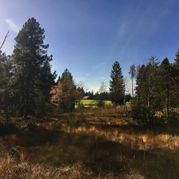 Today in #sulzberg! Love the #colours of #autumn! #goldenautumn #visitvorarlberg Sulzberg