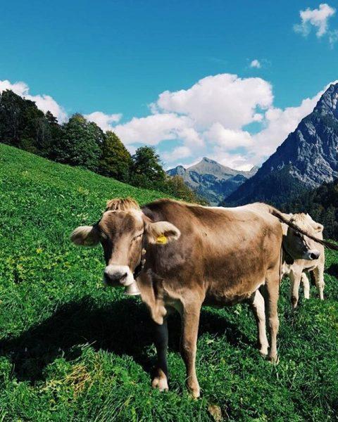 Nicht nur wir genießen die milden Temperaturen.. ☀️ . . #grosseswalsertal #buchboden #herbst ...