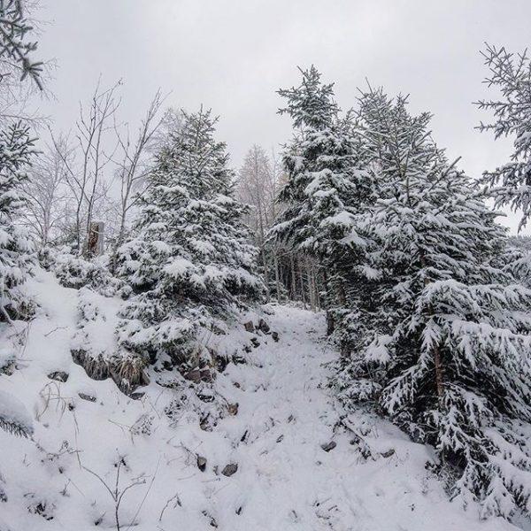 Schneeeee ❄️🏃 #snow #winter #bregenzerwald #dornbirn #meindl #garmin #gopro Staufenspitze