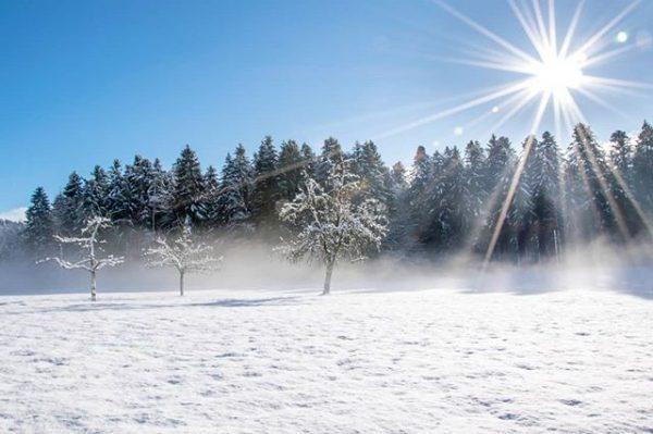 Sunshine ☀️ #winter #winterwonderland #wintervibes #winterishere #schnee #snow #wald #nature #adventure #forest #naturephoto ...