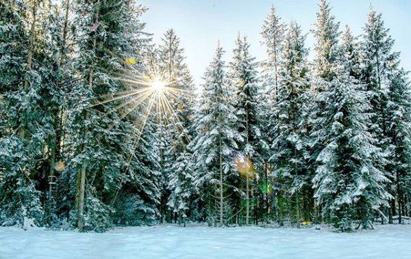Baby, it's cold outside ❄🌲☀️❤ #winter #winterwonderland #wintervibes #winterishere #schnee #snow #wald #nature ...