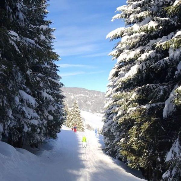 #winterwonderland #skiing #kleinwalsertal #heuberg #Zaferna #skiing #sunnywinterdays #woods #snow #vorarlberg #austria Kleinweisertal