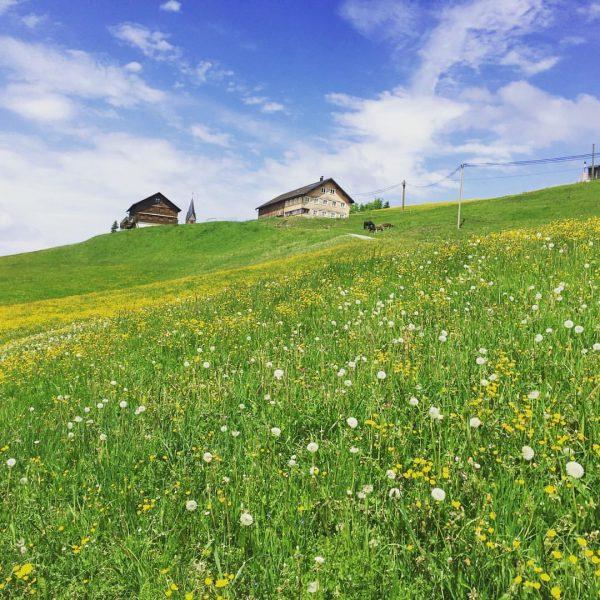 Wild flower meadow* * * * * #rindberg #marienkapelle #sibratsgfäll #vorarlberg #bregenzerwald #austria ...