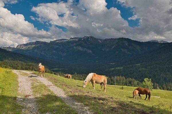 Landschaft im Bregenzer Wald #bregenzerwald #österreich #landschaft #natur #wiesen #pferde #berge #wolken #meadows ...