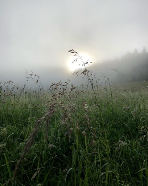 The Meadow #doren #bregenzerwald #meadow #foggy #photography #photographer #picoftheday #meinvorarlberg #wiese #inthemorning #flowers ...