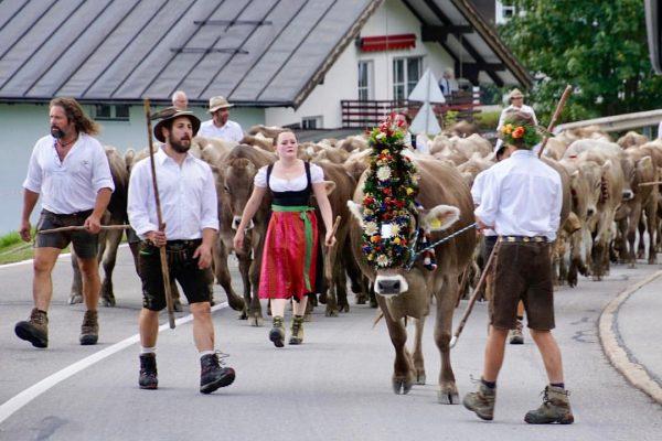 Viehscheid im Kleinwalsertal 🐄🐄🐄🎈😍 . . . #viehscheid #mittelberg #kleinwalsertal #silviamannsbartfotografie #urlaub Der ...