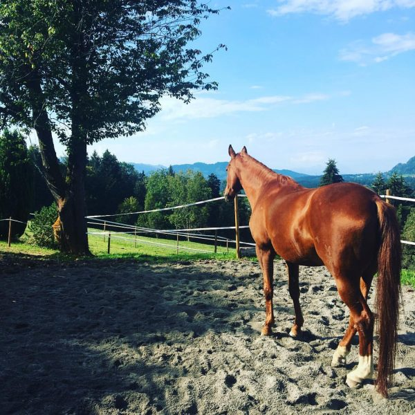 Have a nice day #beautifulday #autumn #nature #mylove #horse #horseofinstagram Sulzberg, Vorarlberg, Austria