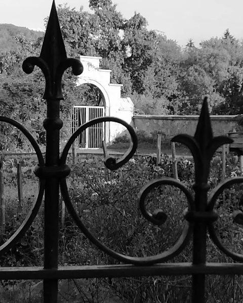 #gardenphotography (c) karl seitinger 2018 . . . [...] #mobilephotography #mobilephoto #bwphotography #bnw_captures ...