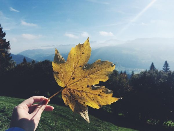 #autumn 🍁💛 . . . . #fall #photo #instaphoto #photography #vsco #vscocam #vscocze ...