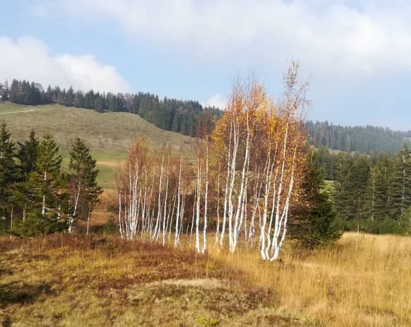 #hochhäderich #bregenzerwald #vorarlberg #austria #moor #nature #landscape #trees #birch #autumn #colours #hiking #home ...