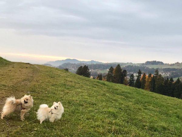 #krumbach #moorekrumbach #wandern #bregenzerwald