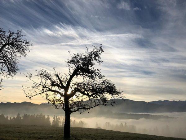 FoggyTreeMagic #doren #foggy #bregenzerwald #photography #photooftheday #foggyday #meinvorarlberg #trees #austrianroamers #landscapephotography #photographer #forest ...