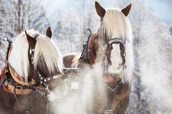 Wenn es Winter wird ❤️ #winterzauber #urlaubinoesterreich #bregenzerwald #auschoppernau #pferdeschlitten #schneallopetersros #austrianalps #wintersun ...