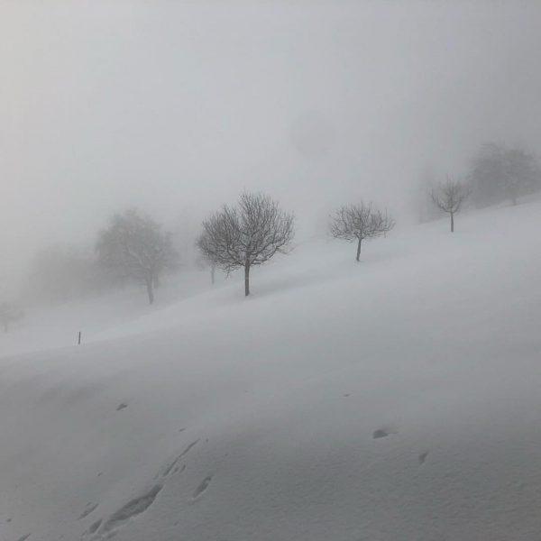 Nebelgemälde - fogpainting #fog #trees #winterlandscape #winterwonderland #snow #winter #winterwalk #viktorsberg #vorarlberg #austria ...