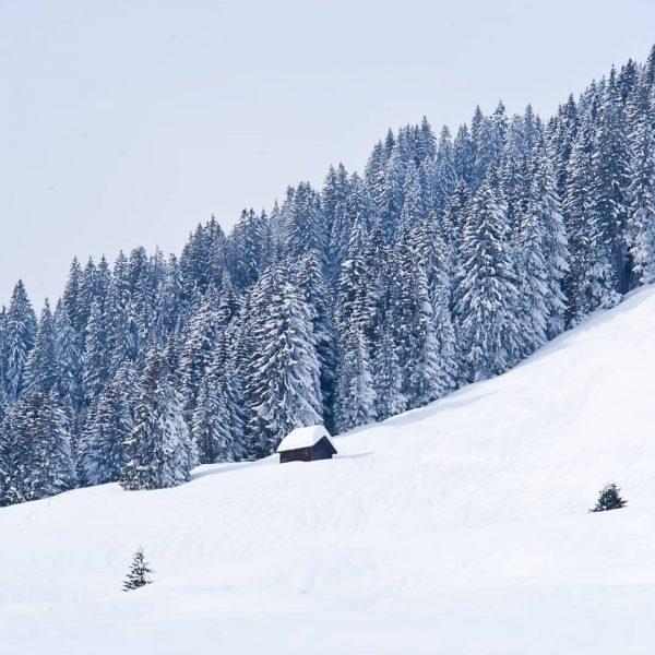 . winter wonderland in Bezau ❄☃️❄☃️❄☃️❄☃️❄☃️❄ . #winterwonderland #schnee #kutschefahren #rodeln #skifahren #winterwandern ...