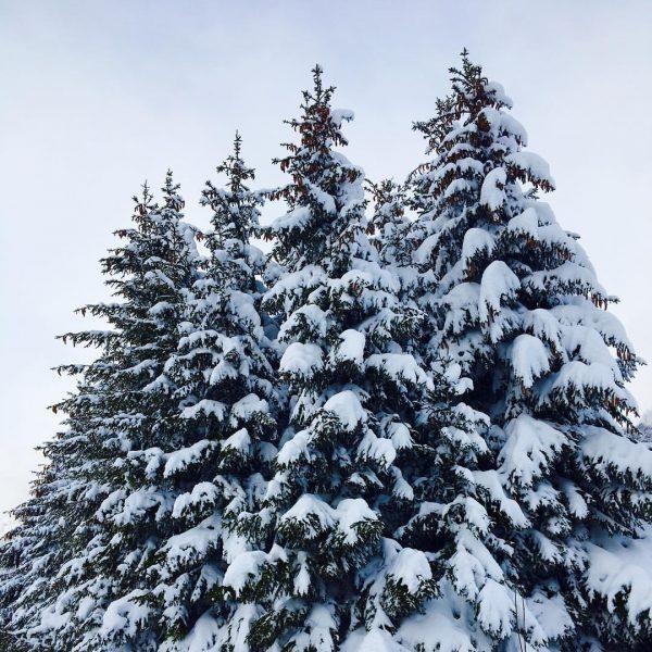 •WINTERWONDERLAND• #winter #snow #vorarlberg #klostertal #soschö #winterliebe Dalaas, Vorarlberg, Austria