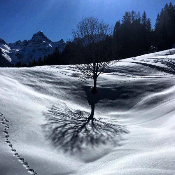 #Baum #tree #schatten #zimba #bürserberg #Brandnertal #Vorarlberg #Österreich #austria #alpen #winter #ski #bluesky #alps #berge #mountains Tschengla