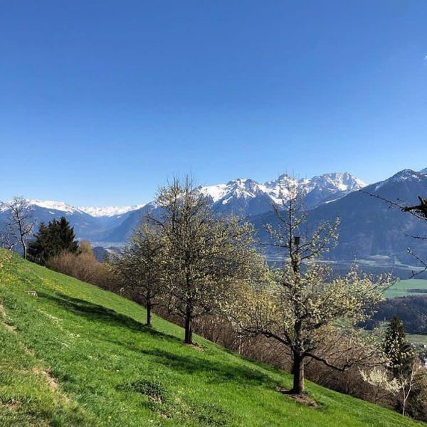 What a wonderful #weekend that was to enjoy time outside and watch #nature blossom 🌷🏔 #springtime #myvorarlberg...