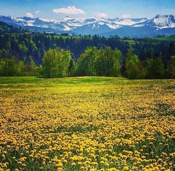 Spring contrast 📸 by @margitmoosbrugger #visitbregenzerwald #bregenzerwald #vorarlberg #doren #flowers #contrast #spring #green ...