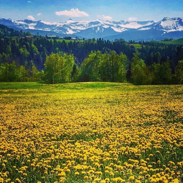 KONTRAST . . . . . #frühling #spring #nature #naturephotography #landscapephotography #landschaft #outdoor ...