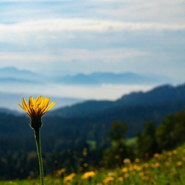 Auf einer kleinen Wanderung schweift der Blick Richtung Bregenzer Wald. Aufgenommen zwischen Möggers (Österreich) und dem Pfänder....