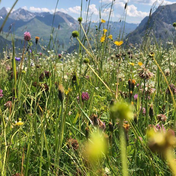 Bergwiesen im Sommer ☀️ Ab 19. Juni 2019 starten wir in die Sommersaison ...