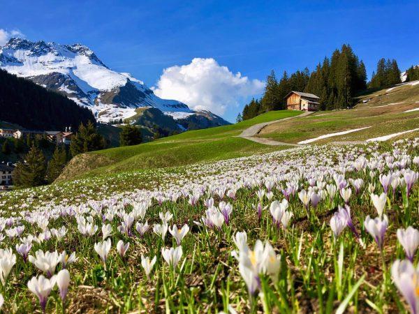 springfeeling @lechzuers #lech #zuers #arlberg #austria #mylechzuers #myvorarlberg #spring #natureparadise #holiday #alps #flowers #erholung #lavendellech #nature #walk...