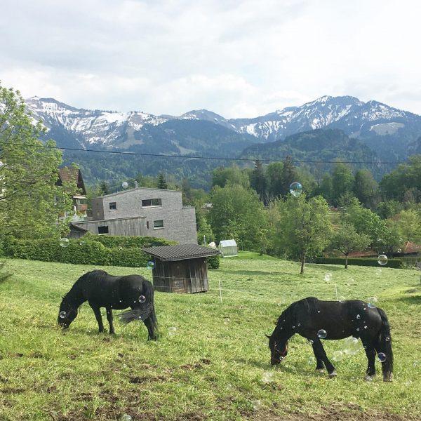 ⛰ . . #berge #nature #naturelove #naturegirl #bodensee #vorarlberg #dornbirn #kehlegg #travelgram Kehlegg, ...
