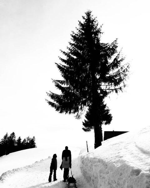 #alberschwende #rodeln #rodeln❄️⛄ #brüggelekopf #schnee #vorarlberg #meinvorarlberg #alpen #österreich #österreich🇦🇹 #austria #bnwphotography #bnwphoto ...