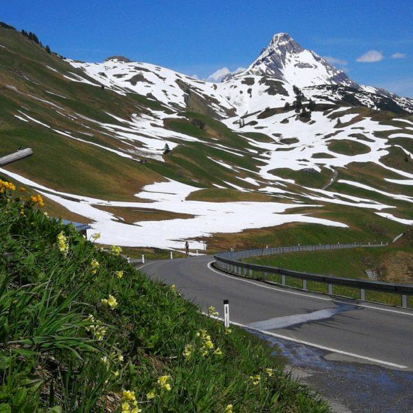 Der Frühling kommt doch noch 😄🏔️ #warthschröcken #warth #schröcken #flowerpower #biberkopf #widdersteinhütte #mountainlove ...