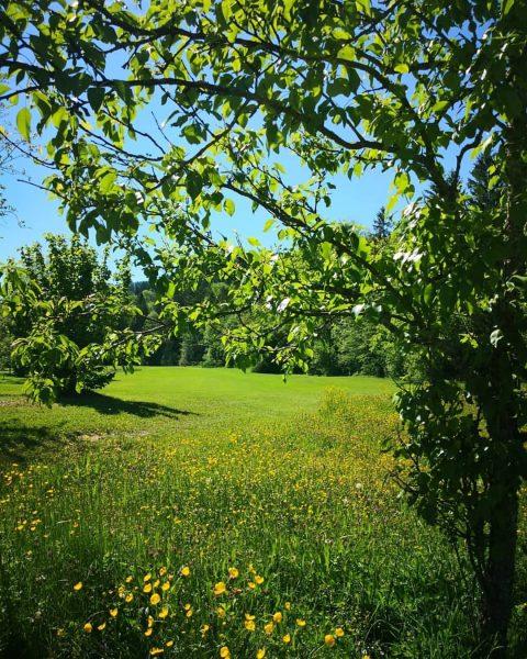 ☀️🌼⛳🏌️ #GolfParkBregenzerwald #golf #niceweather #golfmachtspaß #golfplatz #golfcourse #riefensberg #bregenzerwald #oberstaufen