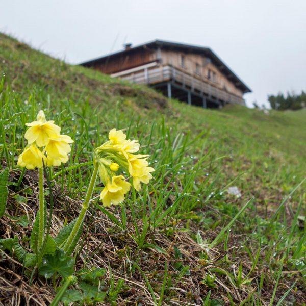 Treasures along the way 🌼 #hikingseason #myvorarlberg #visitvorarlberg Muttersberg, Vorarlberg, Austria