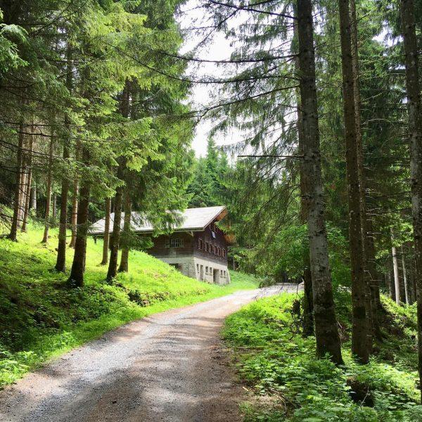 ... auf unserer Mountainbiketour gestern, 15.6.2019, von Röthis bis zur Alpe Pöpiswies - ...