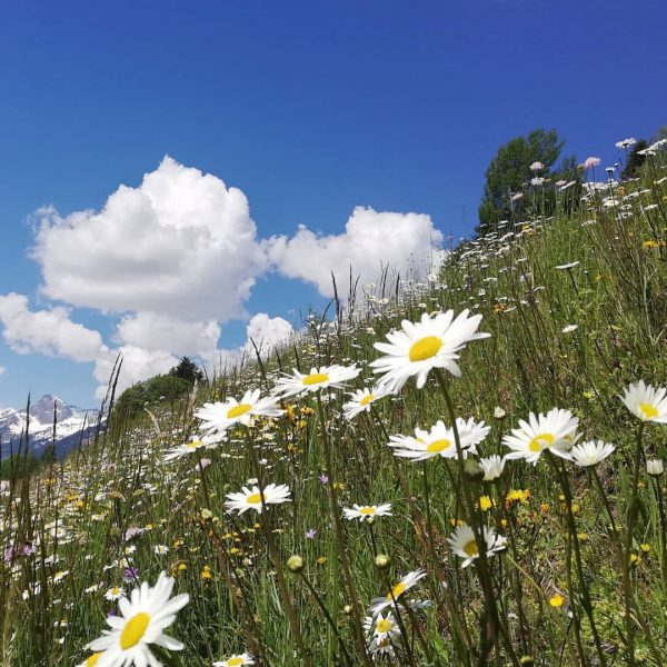 Herrlich.😊 #feelgood #flowers #sunnyday #explorepage #meinmontafon #vorarlbergwandern #mountains #hotelbergerhof #hike #bike #holiday #panorama