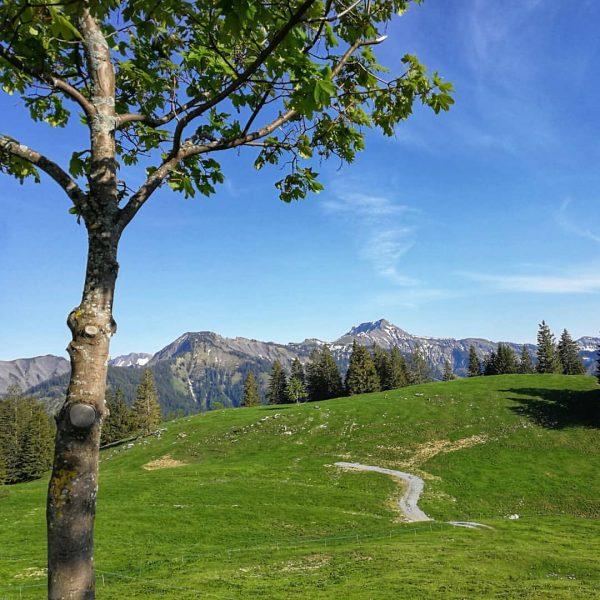 Wonderful weekend to be up the mountains ⛰️❤️ #mountains #berge #wanderlust#forest #Vorarlberg #ländle #hoherfreschen #homeiswherethemountainsare #dahoamischwodbergsind #alpen...