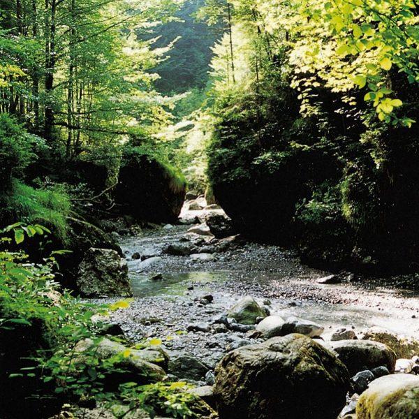 Wanderlust statt Bürofrust 😍 Verschiedene Wege führen dich zu Natur-Schönheiten wie zum Beispiel ...
