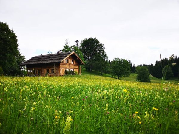 Frühlingserwachen auf der Almwiese. Einfach zum Genießen. . . #austria #vorarlberg #bürserberg #alps ...