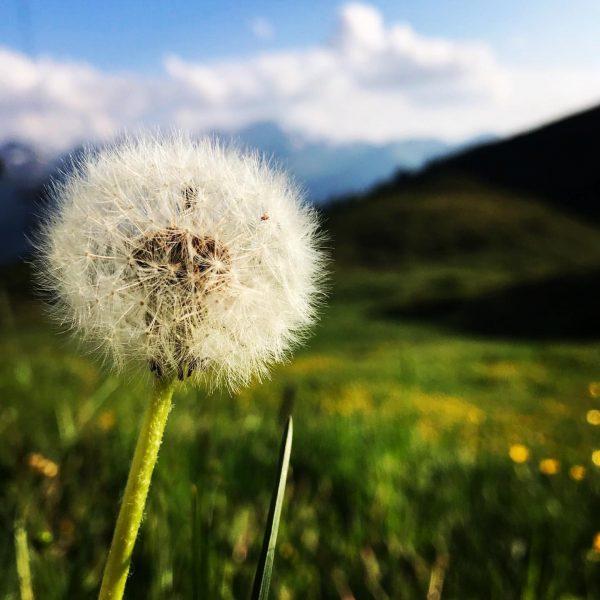 So wundervolle Blumen am Berg 🌸🍀🏃🏽♂️ • • • #amholand #augenblicke #urlaub #wandern #wellness #gourmet #genialeswetter #natur...