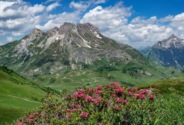 Blick von der Kriegeralpe in Lech auf das Auenfeld #alpen #mountains #alps #alpenliebe ...