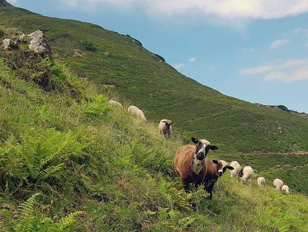 Thüringer Schafalpe - not my sheep. A beautiful Sunday in Austria. #sheep #schafe ...