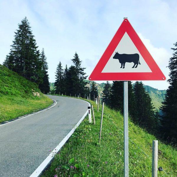 #aussicht #kurvenreichestrecke #wunderschön #straßenschild #furkajoch #bergkühe #gebirgspass #alpen #nature #bergwelt #landscape #vorarlberg #austria ...