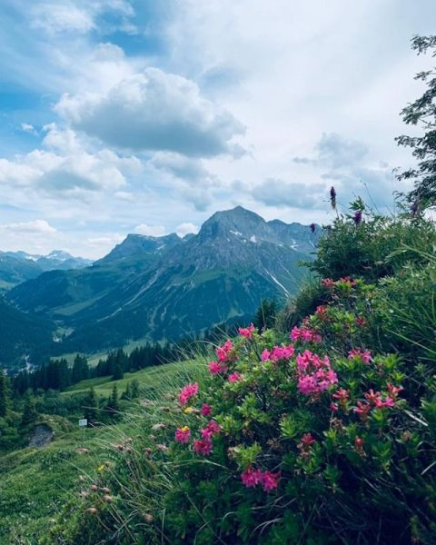 What a great view of our mountains, surrounded by our alpine roses in ...