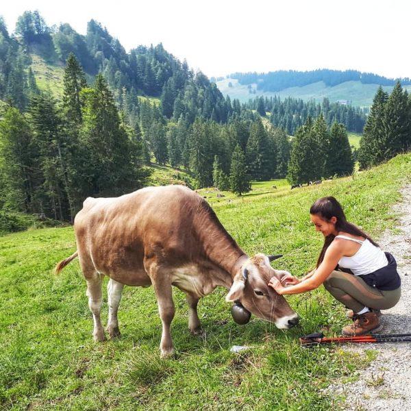 ...𝓽𝓱𝓮𝓼𝓮 𝓶𝓸𝓶𝓮𝓷𝓽𝓼 💚🏞️ _______________________ #naturelovers #bergtour #bergliebe #cow #tierliebe #wanderlust #happyme #vorarlberg #vorarlberg ...