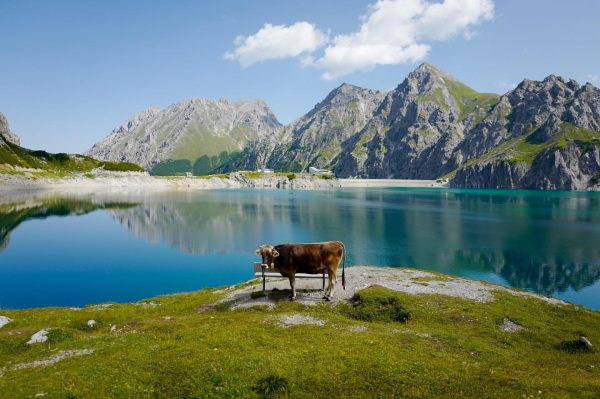 хештег бычок . . . #austria #lünersee #rätikon #brandbeibludenz #vorarlberg #visitvorarlberg #austrianmountains #austrianlakes ...
